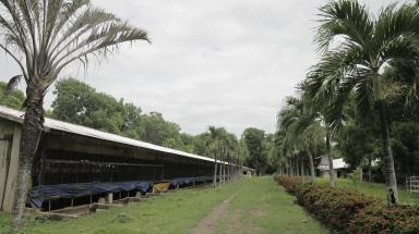 AA Farm 2 (20)