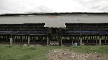 AA Farm 2 (25)