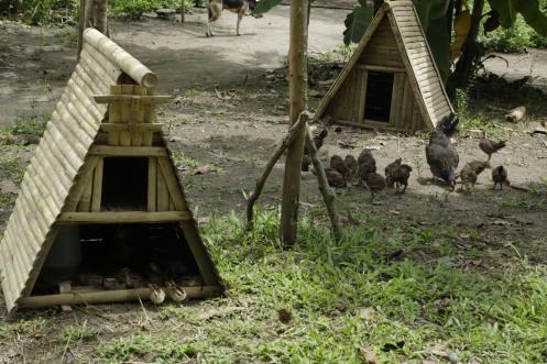 Buro-Buro Farm (228)
