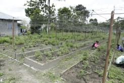 Buro-Buro Farm (57)