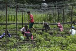 Buro-Buro Farm (65)