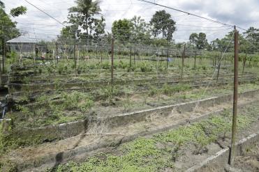 Buro-Buro Farm (80)