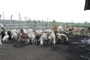 Faith Farms (347)