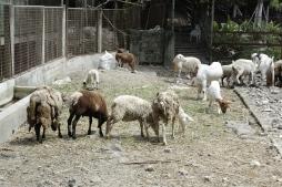 Penalosa Farm Photos (187)