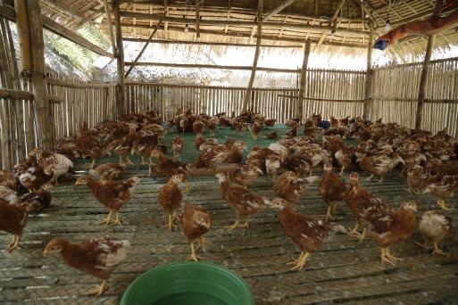 Penalosa Farm Photos (218)
