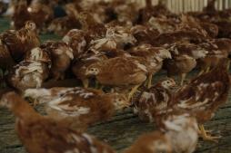 Penalosa Farm Photos (222)