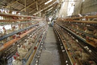 Penalosa Farm Photos (240)