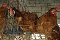 Penalosa Farm Photos (265)